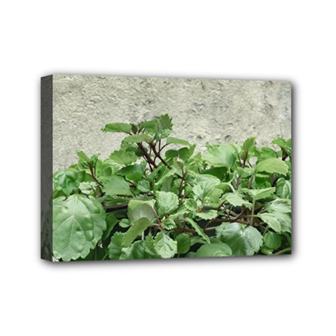 Plants Against Concrete Wall Background Mini Canvas 7  x 5