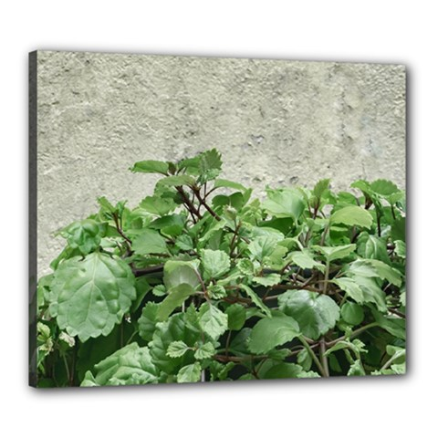 Plants Against Concrete Wall Background Canvas 24  x 20