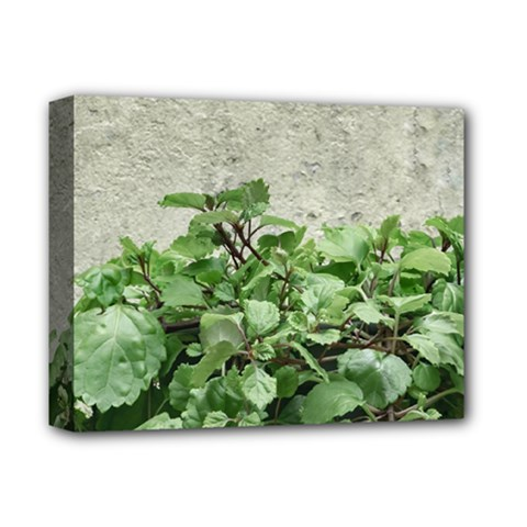 Plants Against Concrete Wall Background Deluxe Canvas 14  x 11