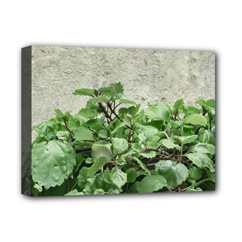 Plants Against Concrete Wall Background Deluxe Canvas 16  x 12