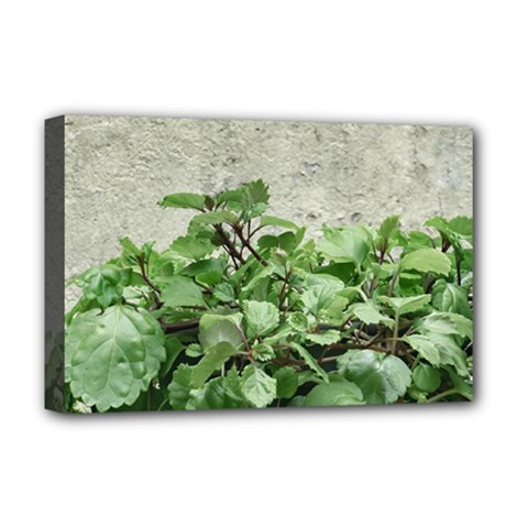 Plants Against Concrete Wall Background Deluxe Canvas 18  x 12