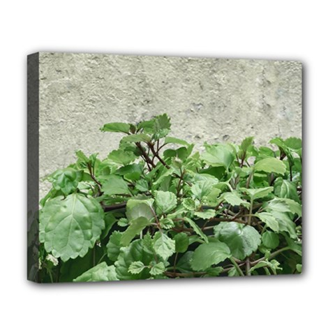 Plants Against Concrete Wall Background Deluxe Canvas 20  x 16