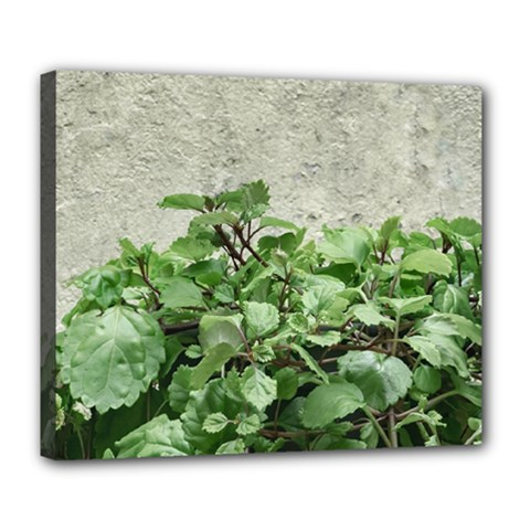 Plants Against Concrete Wall Background Deluxe Canvas 24  x 20