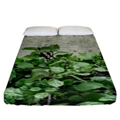 Plants Against Concrete Wall Background Fitted Sheet (King Size)