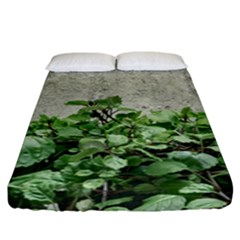Plants Against Concrete Wall Background Fitted Sheet (California King Size)