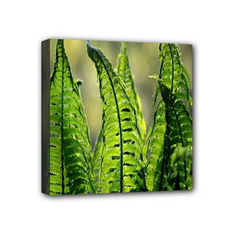 Fern Ferns Green Nature Foliage Mini Canvas 4  x 4