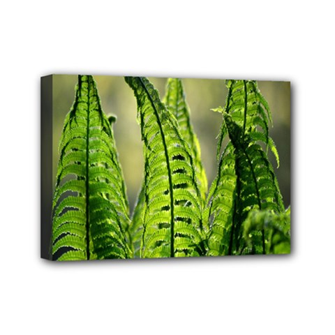 Fern Ferns Green Nature Foliage Mini Canvas 7  x 5