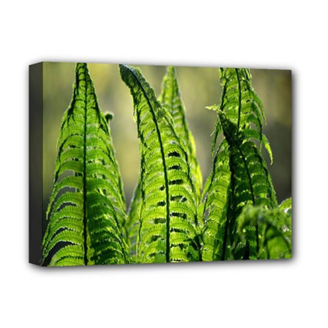 Fern Ferns Green Nature Foliage Deluxe Canvas 16  x 12