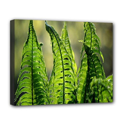 Fern Ferns Green Nature Foliage Deluxe Canvas 20  X 16