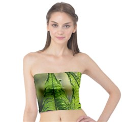Fern Ferns Green Nature Foliage Tube Top