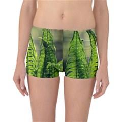 Fern Ferns Green Nature Foliage Reversible Bikini Bottoms