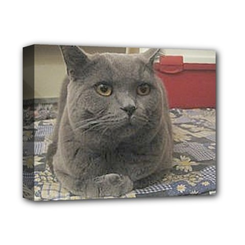British Shorthair Grey Deluxe Canvas 14  x 11