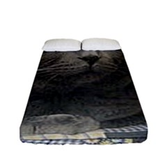 British Shorthair Grey Fitted Sheet (Full/ Double Size)