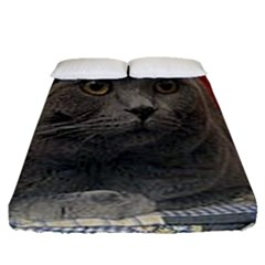 British Shorthair Grey Fitted Sheet (Queen Size)
