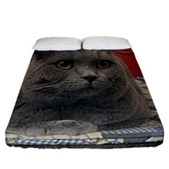British Shorthair Grey Fitted Sheet (California King Size)