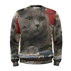 British Shorthair Grey Men s Sweatshirt