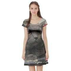 British Shorthair Grey Short Sleeve Skater Dress