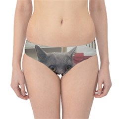 British Shorthair Grey Hipster Bikini Bottoms