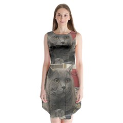 British Shorthair Grey Sleeveless Chiffon Dress