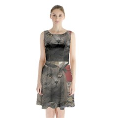 British Shorthair Grey Sleeveless Chiffon Waist Tie Dress