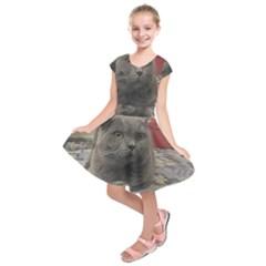 British Shorthair Grey Kids  Short Sleeve Dress