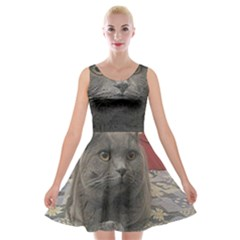 British Shorthair Grey Velvet Skater Dress