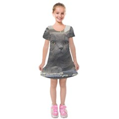 British Shorthair Grey Kids  Short Sleeve Velvet Dress