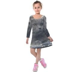 British Shorthair Grey Kids  Long Sleeve Velvet Dress