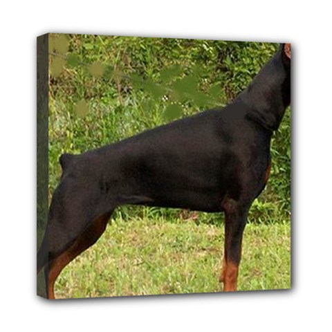 Doberman Pinscher Black Full Mini Canvas 8  x 8