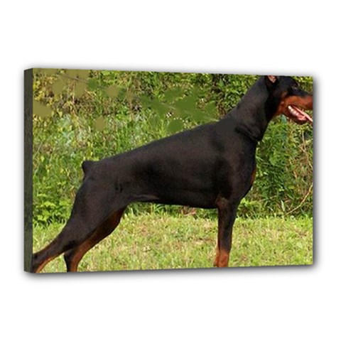 Doberman Pinscher Black Full Canvas 18  x 12