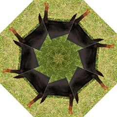Doberman Pinscher Black Full Golf Umbrellas
