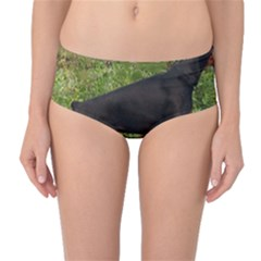 Doberman Pinscher Black Full Mid-Waist Bikini Bottoms