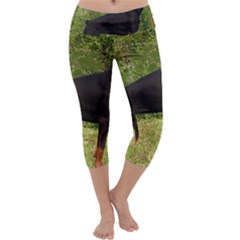 Doberman Pinscher Black Full Capri Yoga Leggings
