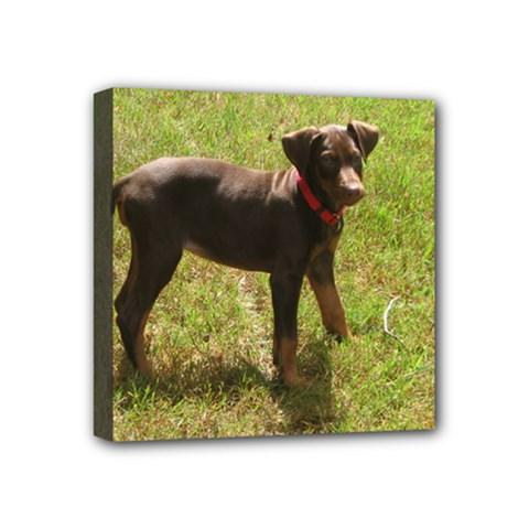 Red Doberman Puppy Mini Canvas 4  x 4