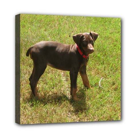 Red Doberman Puppy Mini Canvas 8  x 8