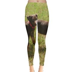 Red Doberman Puppy Leggings