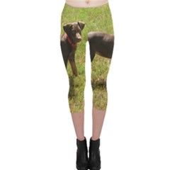 Red Doberman Puppy Capri Leggings