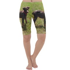 Red Doberman Puppy Cropped Leggings