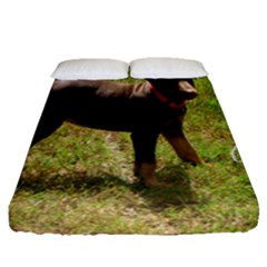 Red Doberman Puppy Fitted Sheet (Queen Size)