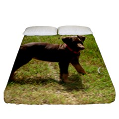Red Doberman Puppy Fitted Sheet (California King Size)