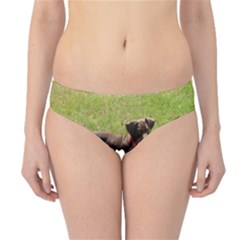 Red Doberman Puppy Hipster Bikini Bottoms