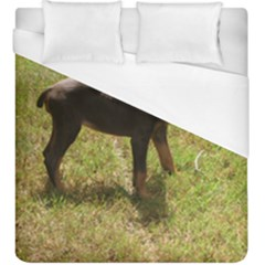 Red Doberman Puppy Duvet Cover (King Size)