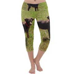 Red Doberman Puppy Capri Yoga Leggings