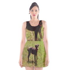 Red Doberman Puppy Scoop Neck Skater Dress