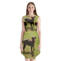 Red Doberman Puppy Sleeveless Chiffon Dress