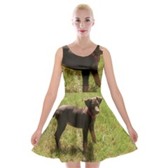 Red Doberman Puppy Velvet Skater Dress