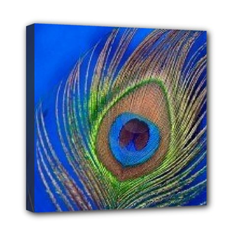 Blue Peacock Feather Mini Canvas 8  X 8
