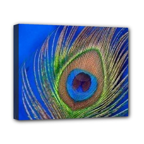 Blue Peacock Feather Canvas 10  X 8