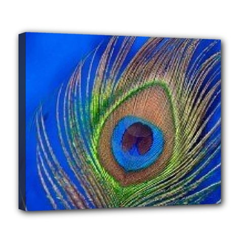 Blue Peacock Feather Deluxe Canvas 24  X 20