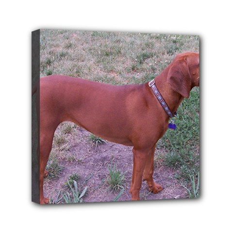 Redbone Coonhound Full Mini Canvas 6  x 6